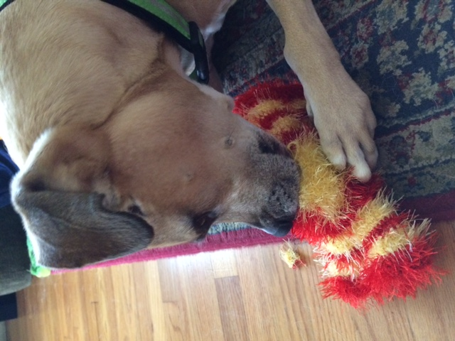 Xuma playing with the candy shaped dog toy